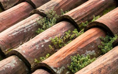 9 Signs You May Need A Roof Restoration